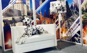 dudu, dalmatinski pas, kinologija, izložbe pasa