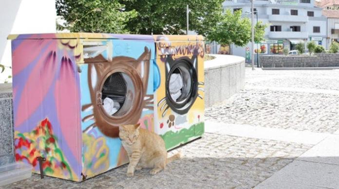 sklonište, mačke