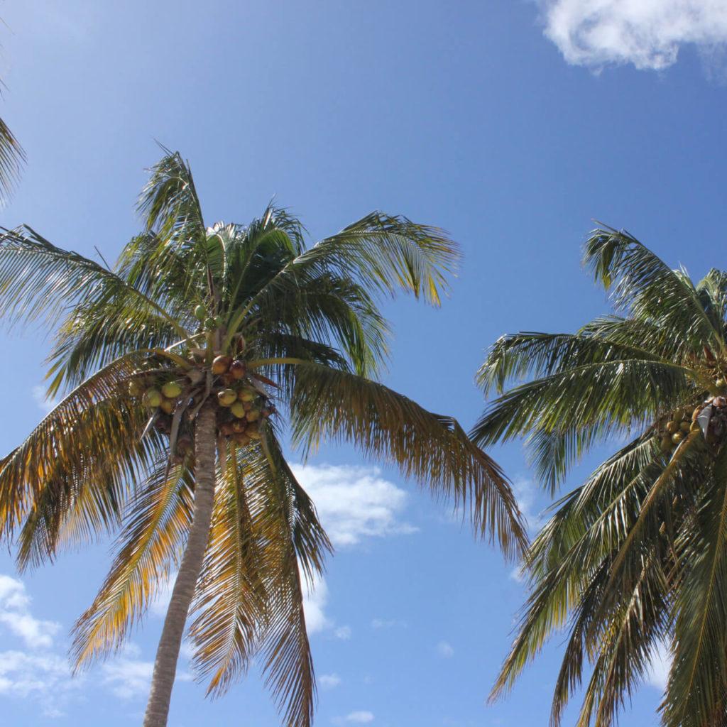 Druženje s palmama