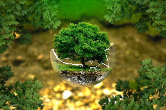 zaštita okoliša, zero waste trend