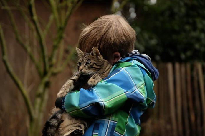 dijete s mačkom, mačke, zdravlje